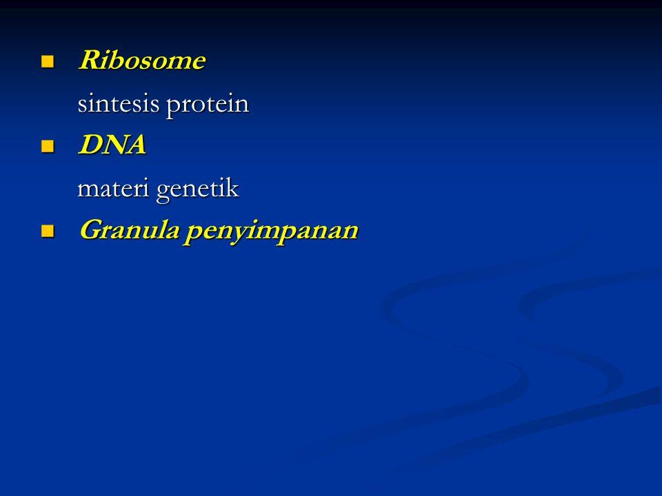 Ribosome sintesis protein DNA materi genetik Granula penyimpanan