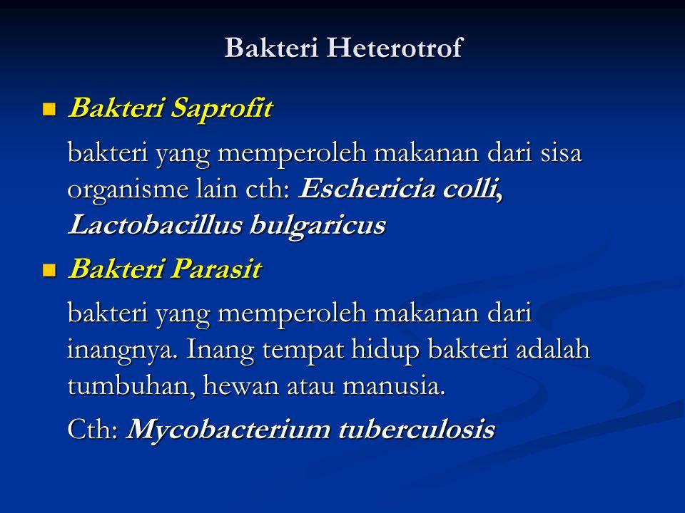 Bakteri Heterotrof Bakteri Saprofit. bakteri yang memperoleh makanan dari sisa organisme lain cth: Eschericia colli, Lactobacillus bulgaricus.