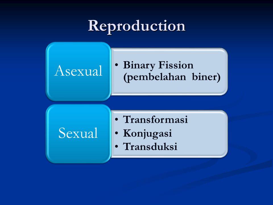 Reproduction Asexual Binary Fission (pembelahan biner) Sexual