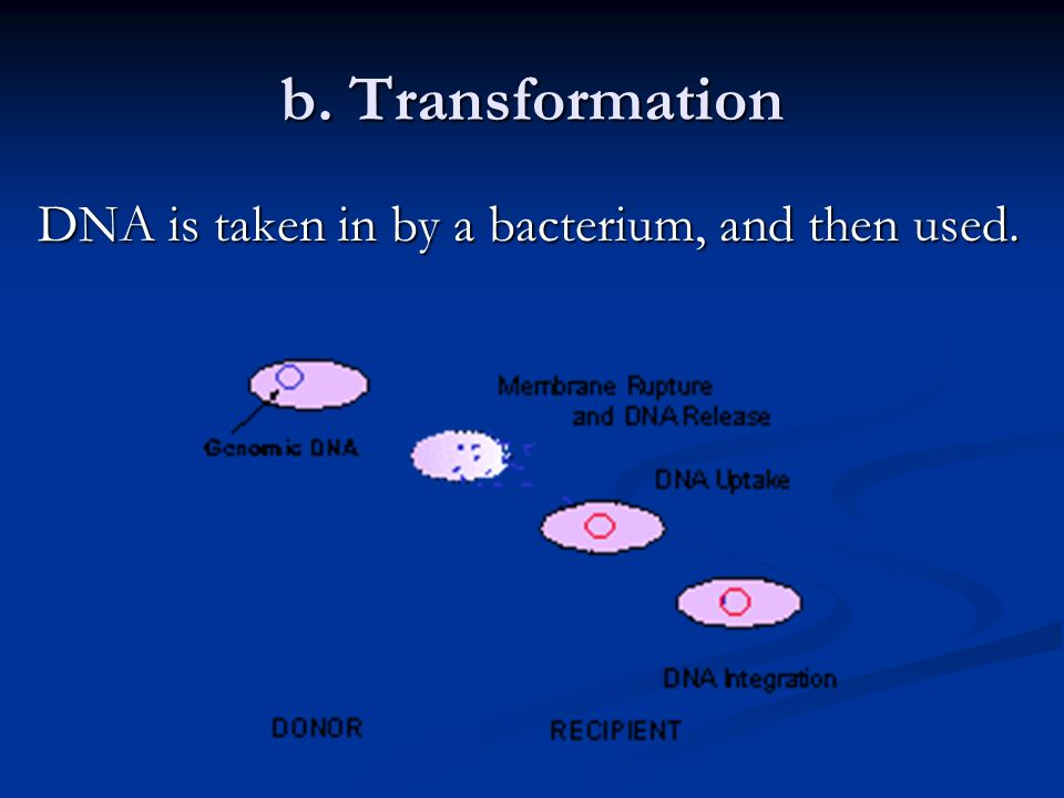 b. Transformation DNA is taken in by a bacterium, and then used.