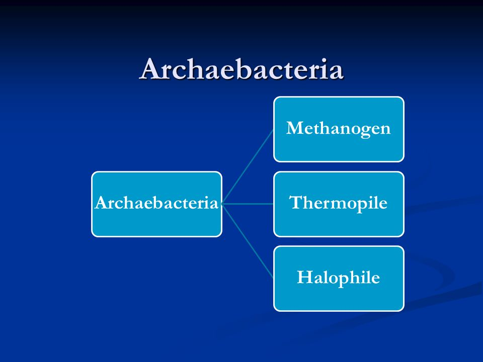 Archaebacteria Archaebacteria Methanogen Thermopile Halophile