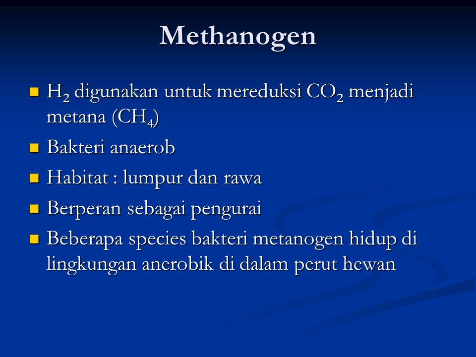 Methanogen H2 digunakan untuk mereduksi CO2 menjadi metana (CH4)