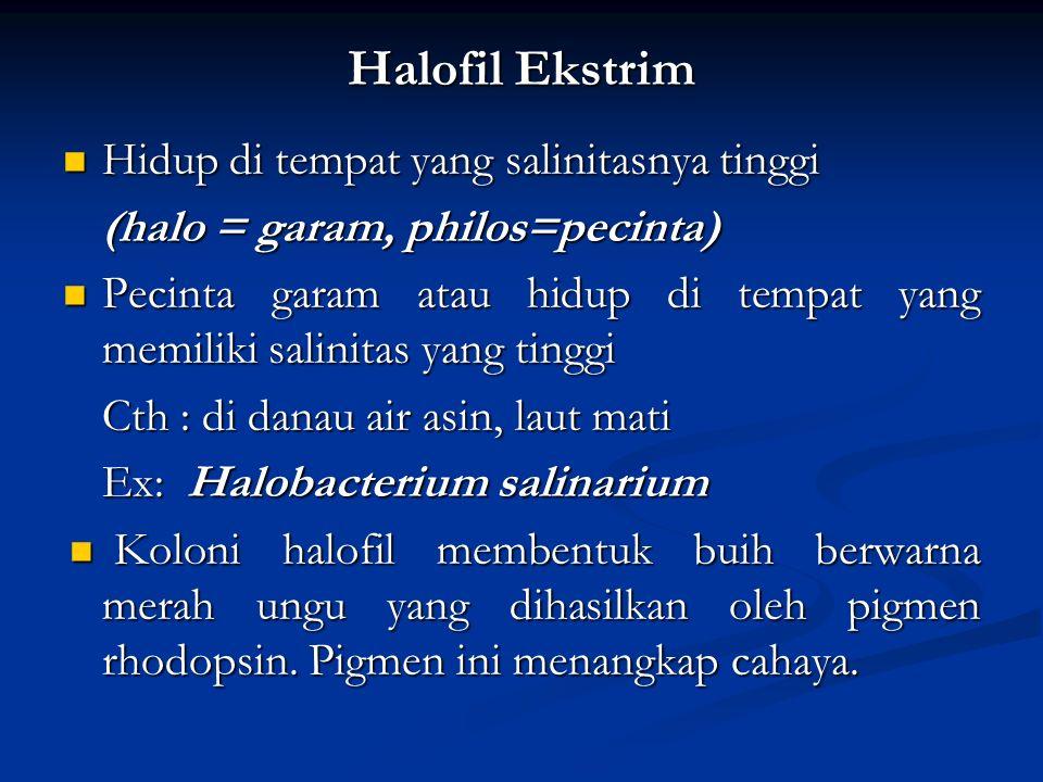 Halofil Ekstrim Hidup di tempat yang salinitasnya tinggi