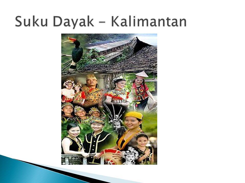 Suku Dayak - Kalimantan