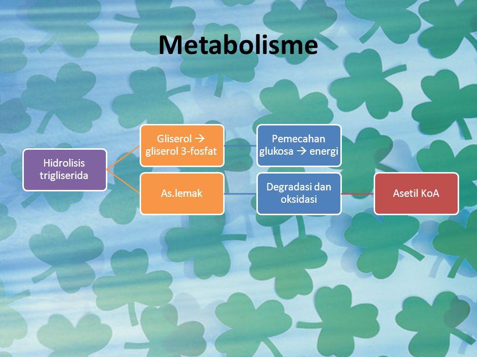 Metabolisme Hidrolisis trigliserida Gliserol  gliserol 3-fosfat
