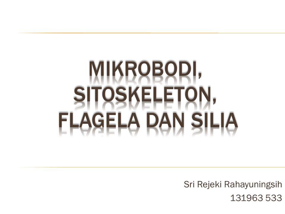 Mikrobodi, Sitoskeleton, flagela dan Silia