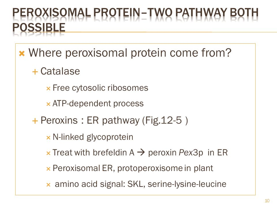 peroxisomal protein–two pathway both possible