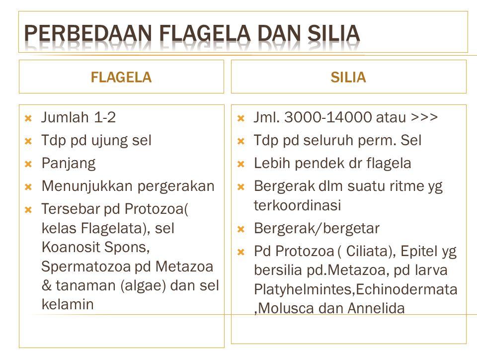 Perbedaan flagela dan silia