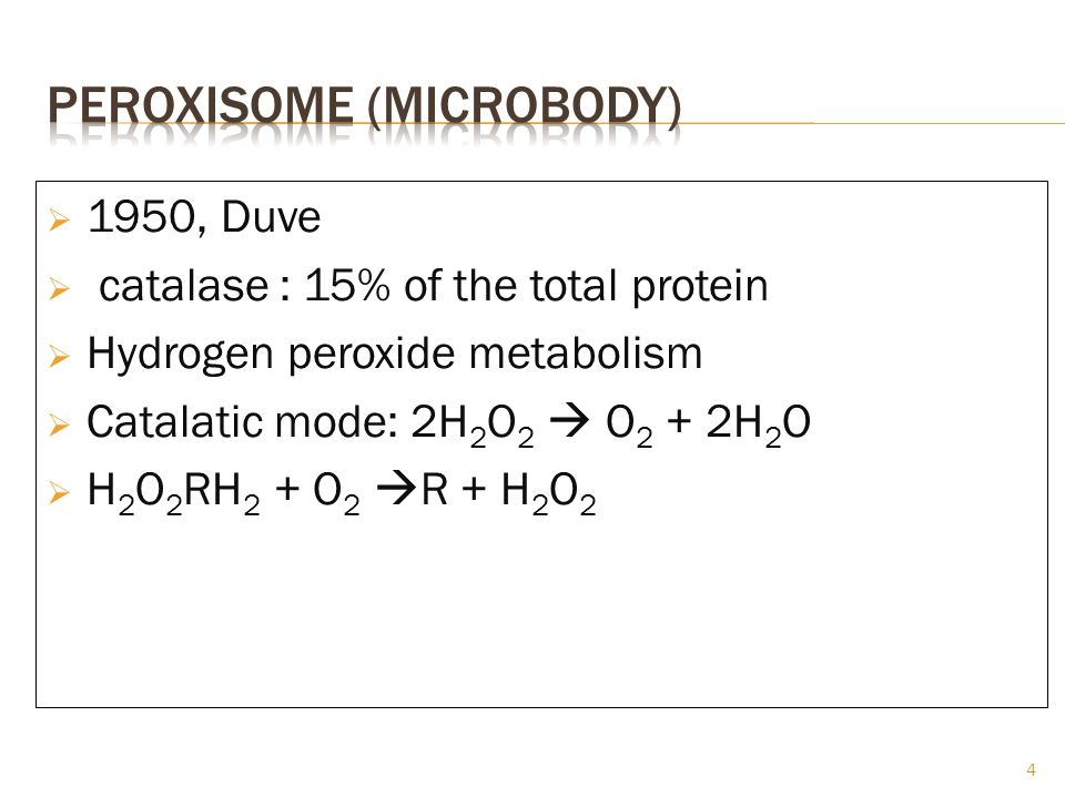 Peroxisome (microbody)