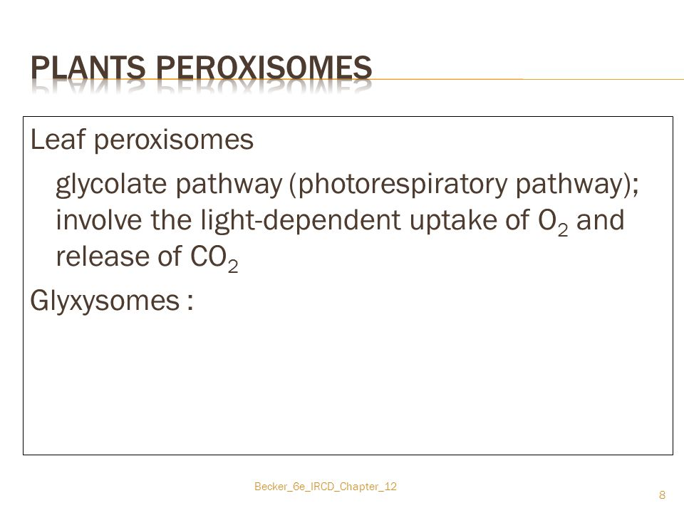 Plants peroxisomes