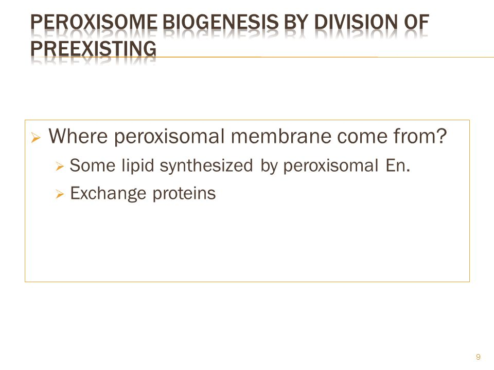 Peroxisome Biogenesis by division of preexisting