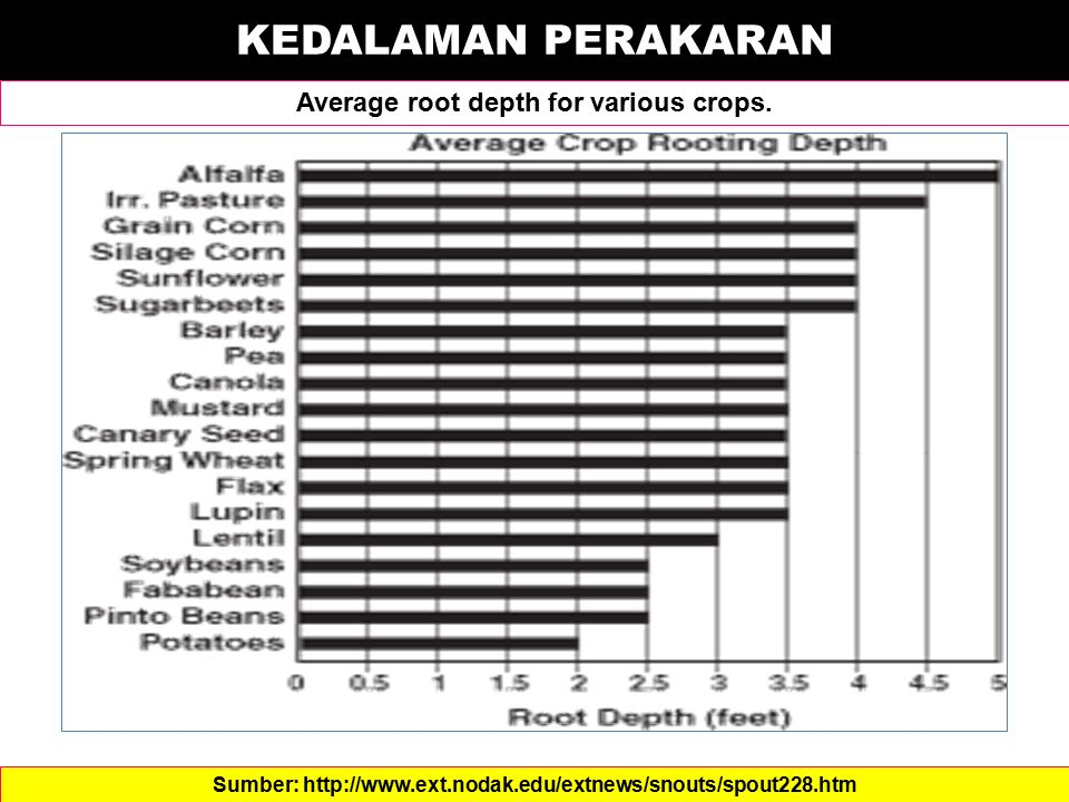 KEDALAMAN PERAKARAN Average root depth for various crops.
