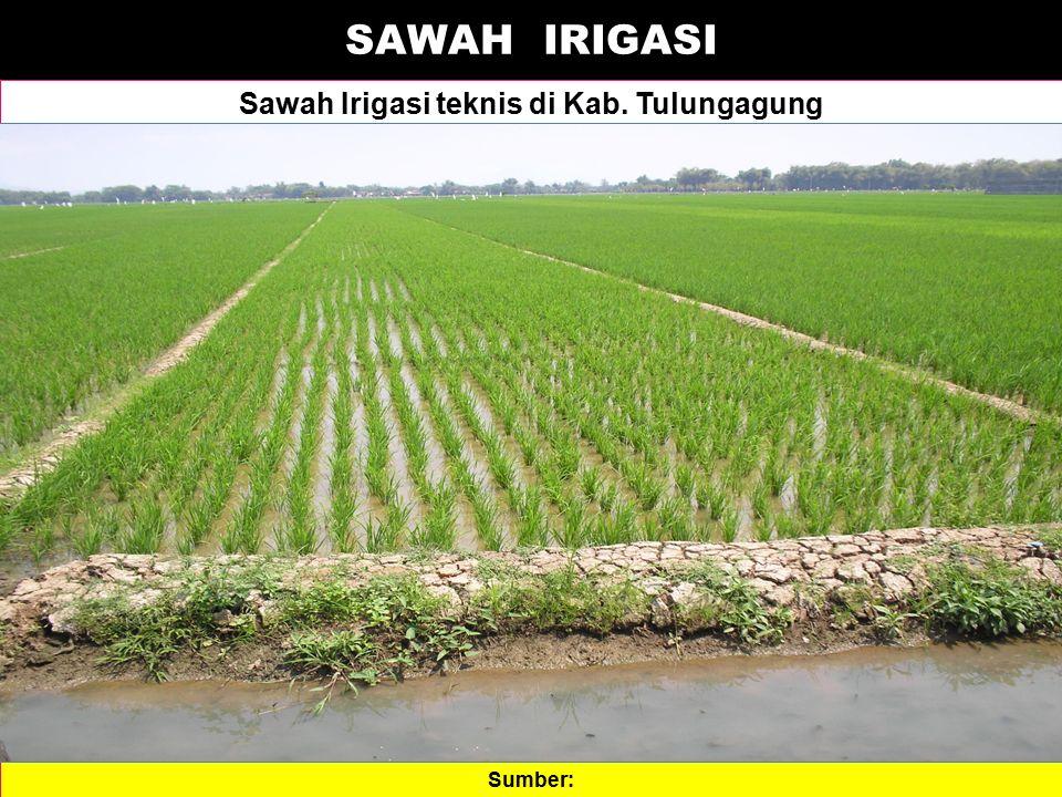 Sawah Irigasi teknis di Kab. Tulungagung