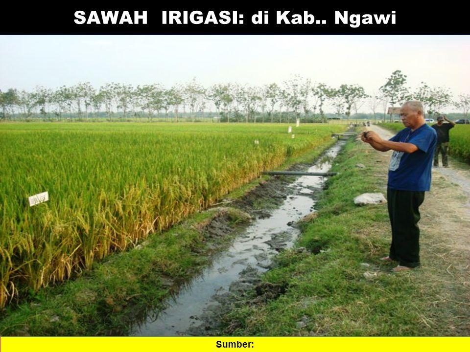 SAWAH IRIGASI: di Kab.. Ngawi