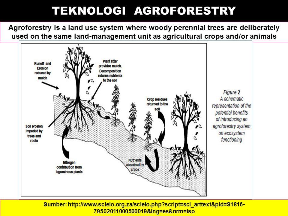 TEKNOLOGI AGROFORESTRY