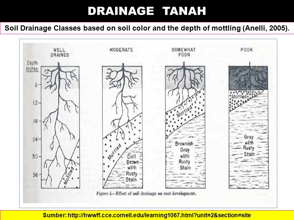 DRAINAGE TANAH Soil Drainage Classes based on soil color and the depth of mottling (Anelli, 2005).