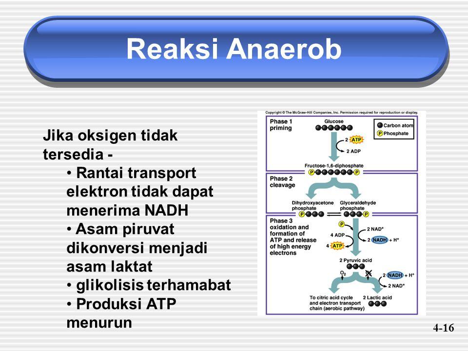 Reaksi Anaerob Jika oksigen tidak tersedia -