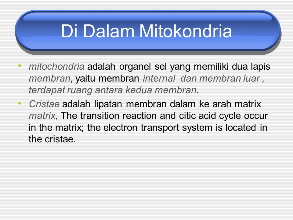 Di Dalam Mitokondria