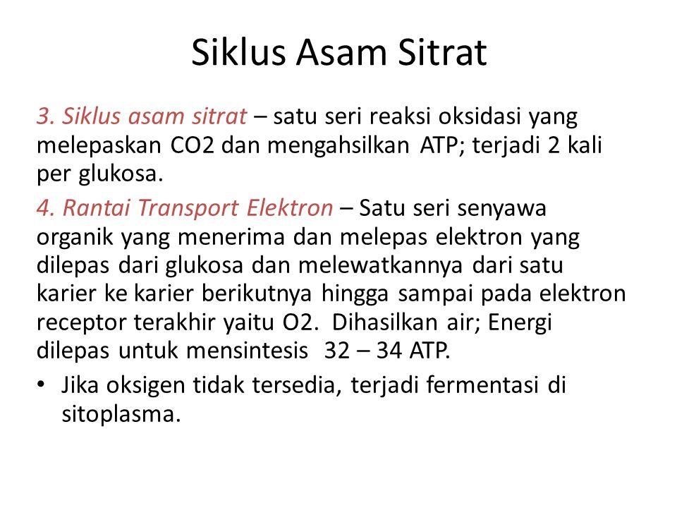Siklus Asam Sitrat 3. Siklus asam sitrat – satu seri reaksi oksidasi yang melepaskan CO2 dan mengahsilkan ATP; terjadi 2 kali per glukosa.