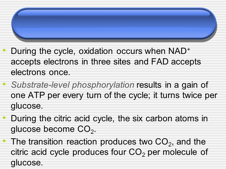 During the cycle, oxidation occurs when NAD+ accepts electrons in three sites and FAD accepts electrons once.