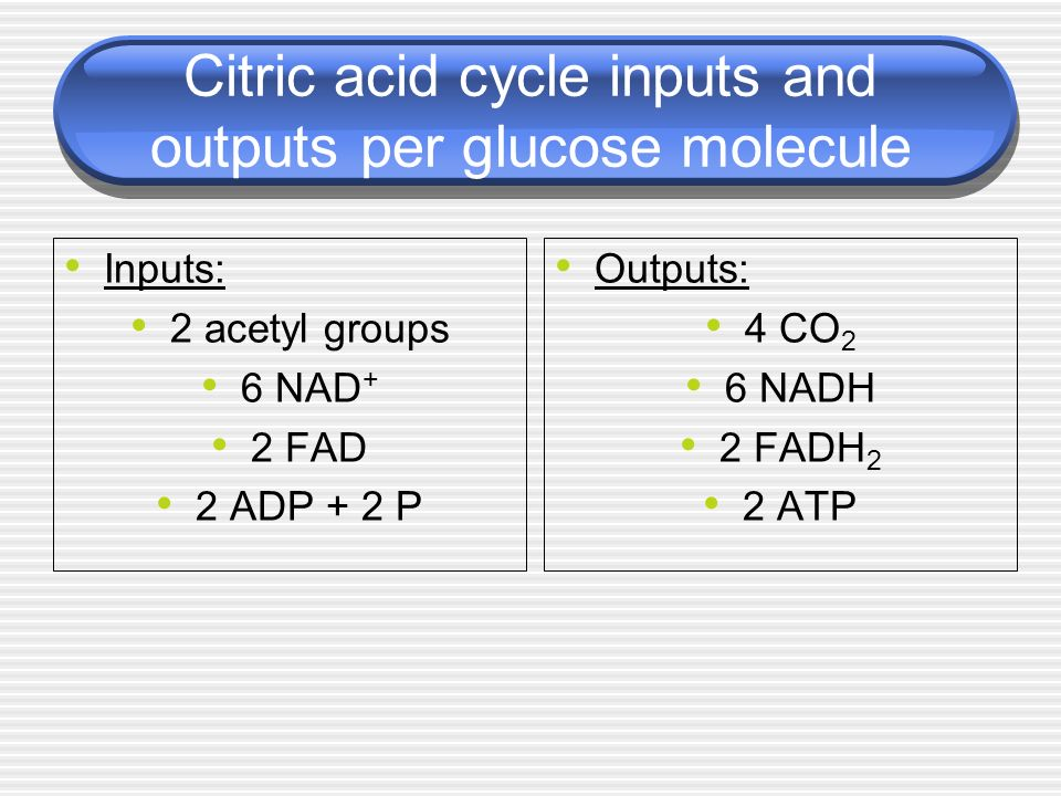 Citric acid cycle inputs and outputs per glucose molecule