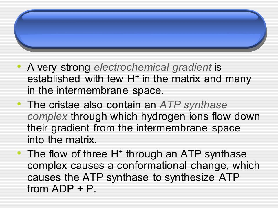 A very strong electrochemical gradient is established with few H+ in the matrix and many in the intermembrane space.