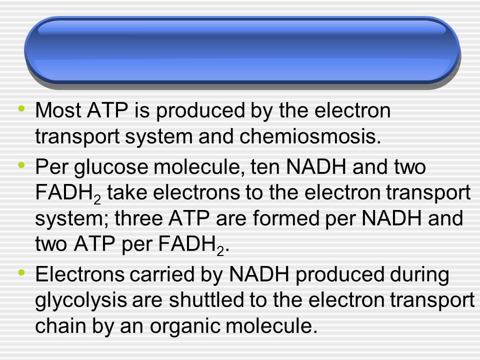 Most ATP is produced by the electron transport system and chemiosmosis.