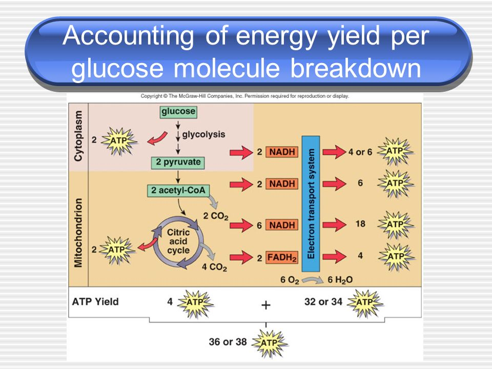 Accounting of energy yield per glucose molecule breakdown