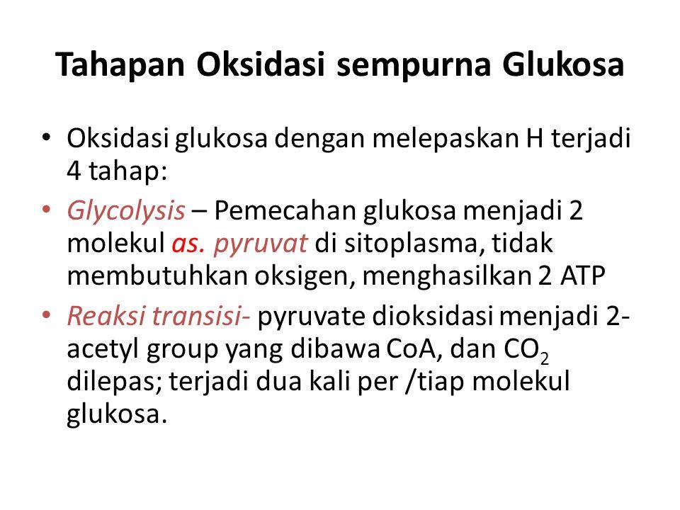 Tahapan Oksidasi sempurna Glukosa