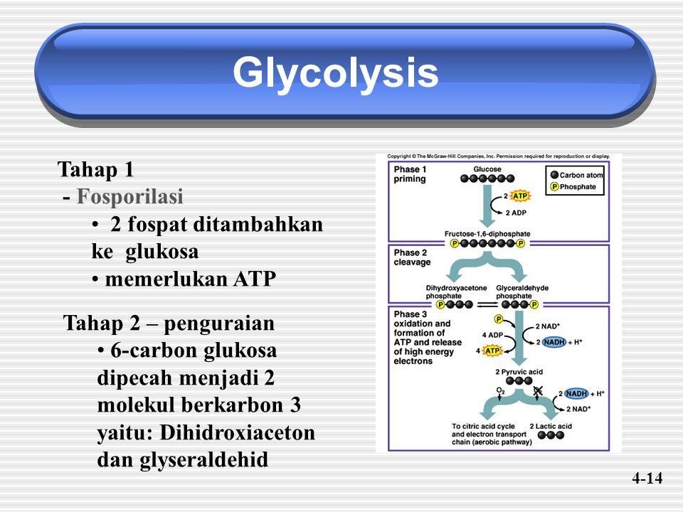 Glycolysis Tahap 1 - Fosporilasi 2 fospat ditambahkan ke glukosa