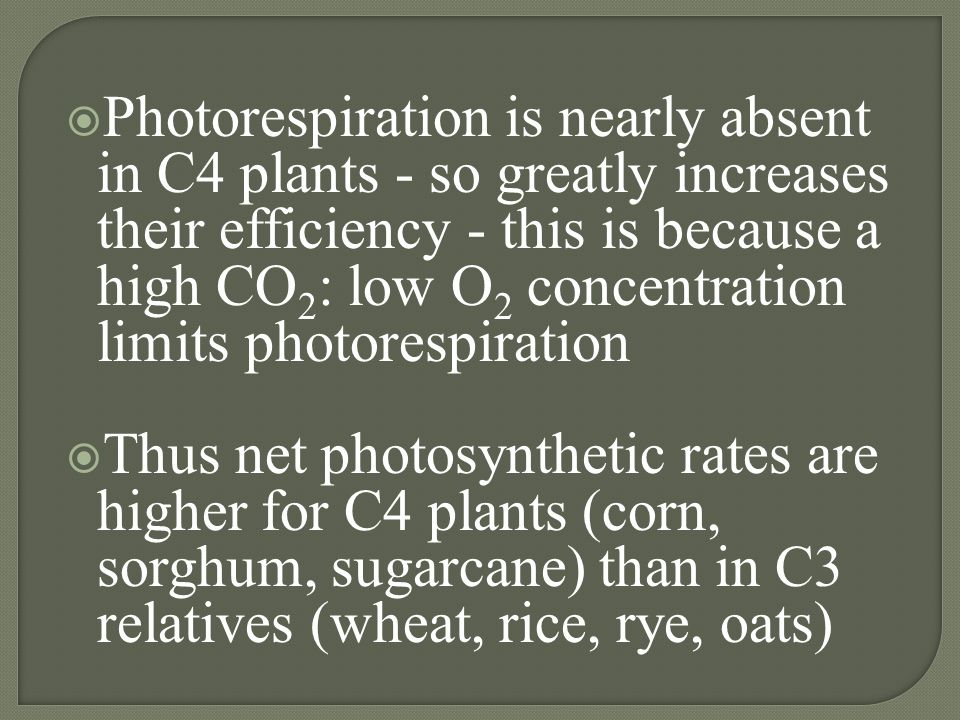 Photorespiration is nearly absent in C4 plants - so greatly increases their efficiency - this is because a high CO2: low O2 concentration limits photorespiration