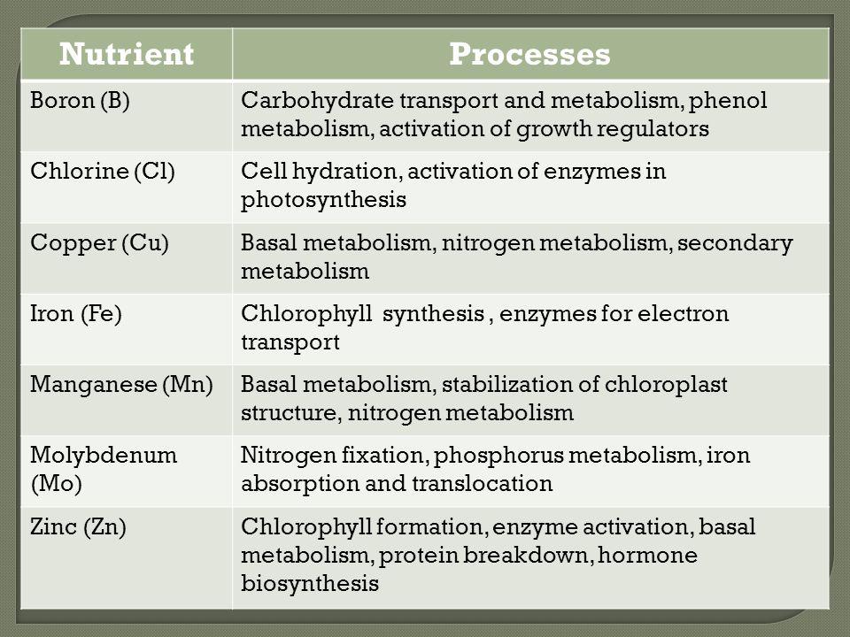 Nutrient Processes Boron (B)