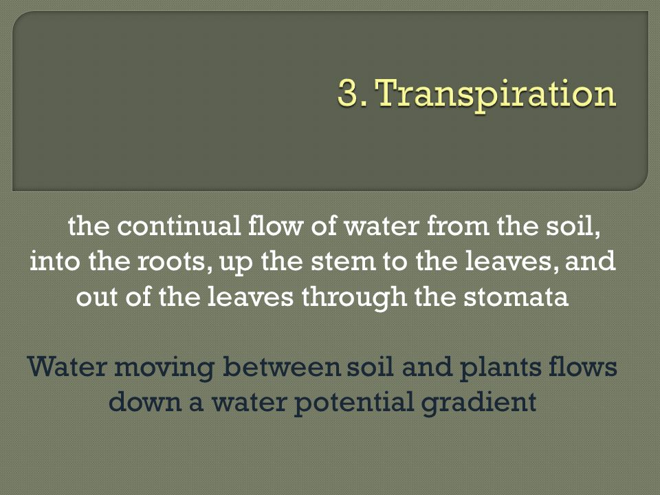 3. Transpiration the continual flow of water from the soil, into the roots, up the stem to the leaves, and out of the leaves through the stomata.