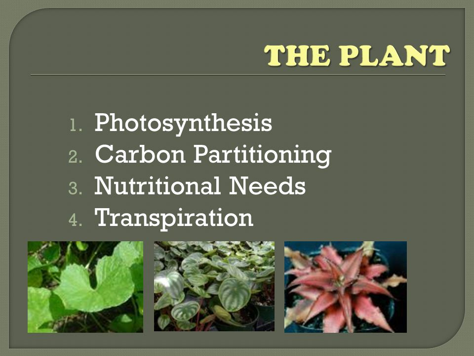 THE PLANT Photosynthesis Carbon Partitioning Nutritional Needs