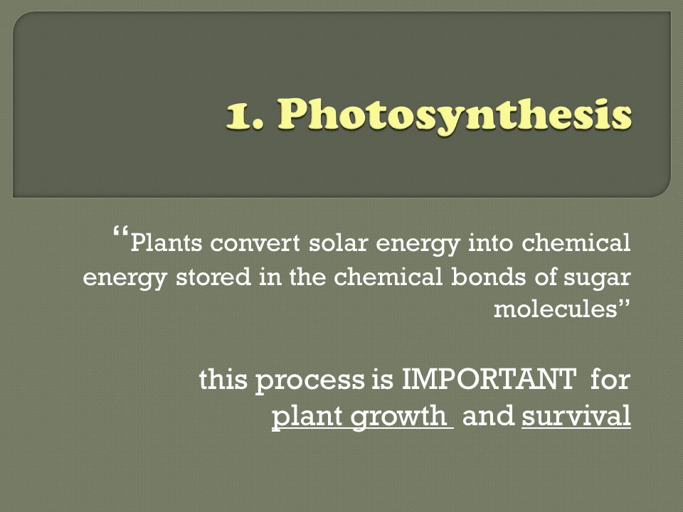 1. Photosynthesis Plants convert solar energy into chemical energy stored in the chemical bonds of sugar molecules