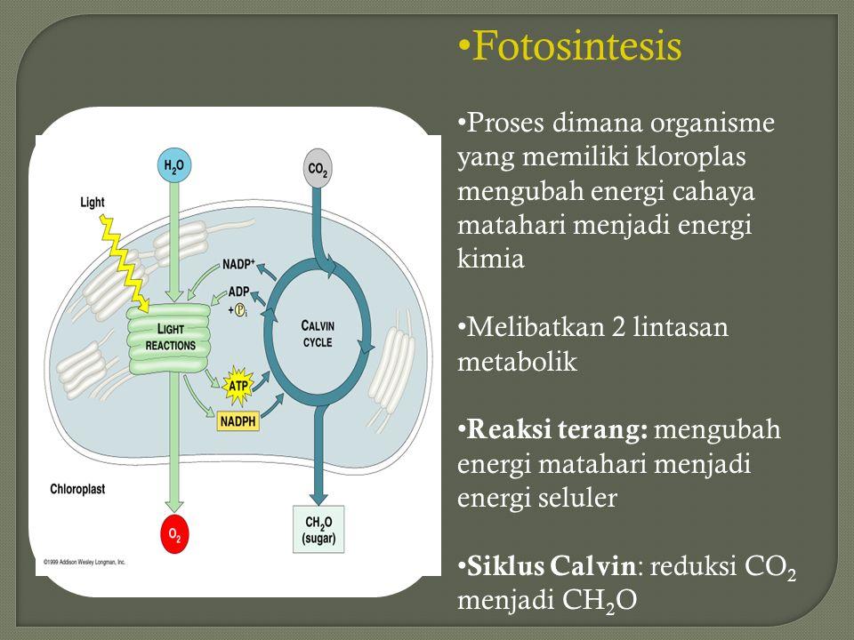 Fotosintesis Proses dimana organisme yang memiliki kloroplas mengubah energi cahaya matahari menjadi energi kimia.