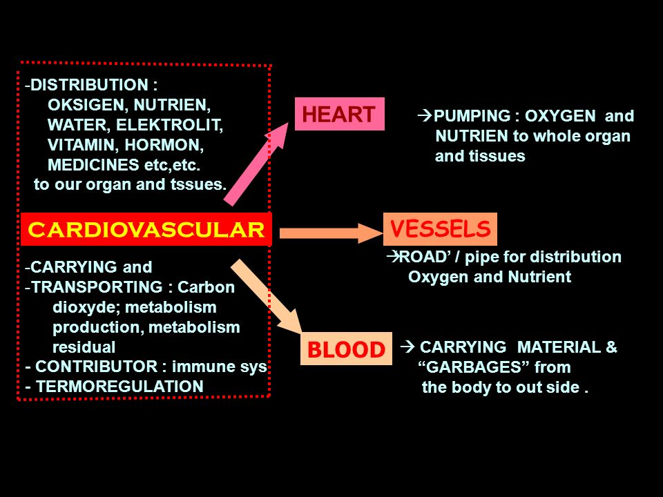 HEART CARDIOVASCULAR VESSELS BLOOD DISTRIBUTION : OKSIGEN, NUTRIEN,