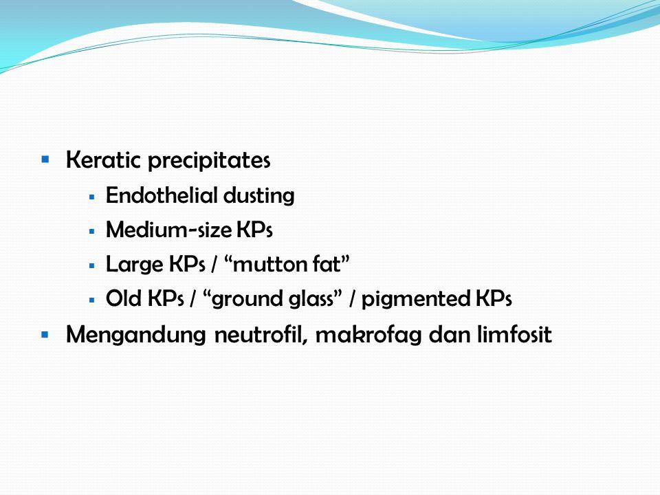 Mengandung neutrofil, makrofag dan limfosit