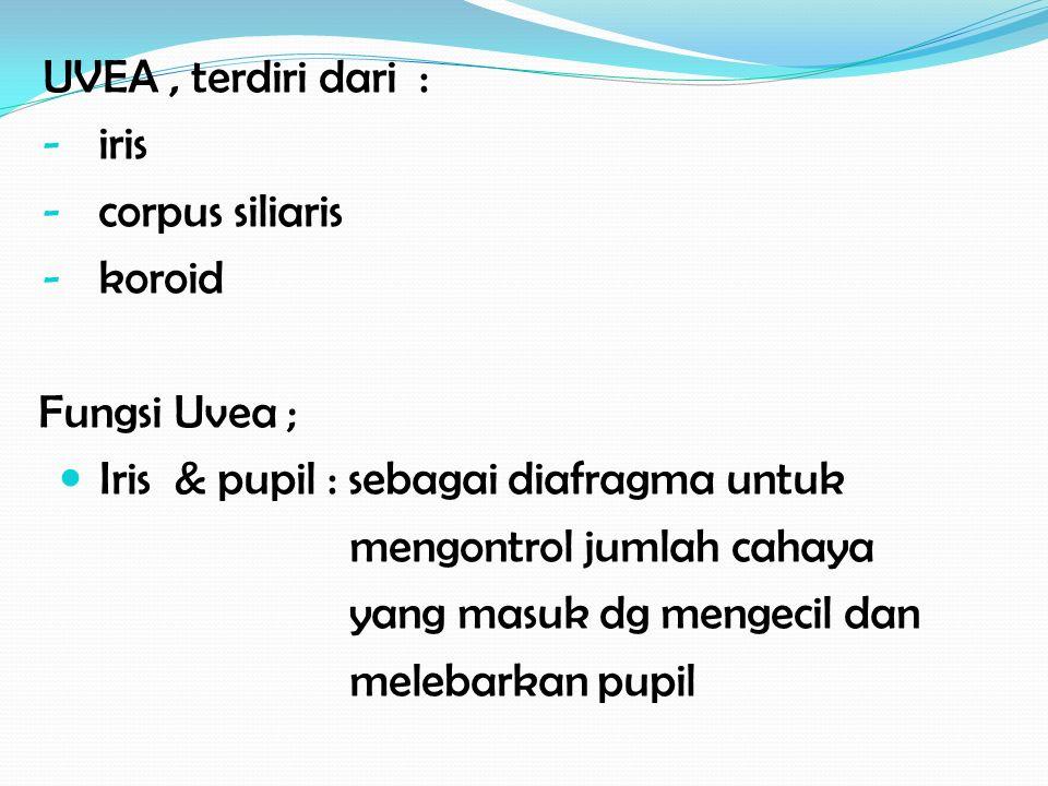 UVEA , terdiri dari : iris. corpus siliaris. koroid. Fungsi Uvea ; Iris & pupil : sebagai diafragma untuk.