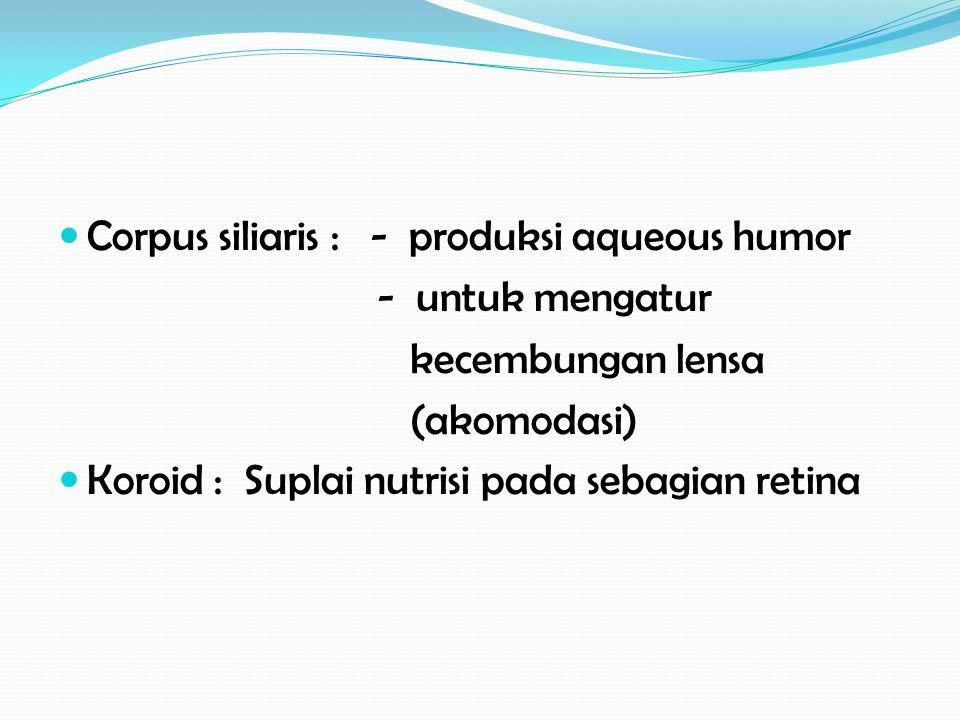 Corpus siliaris : - produksi aqueous humor