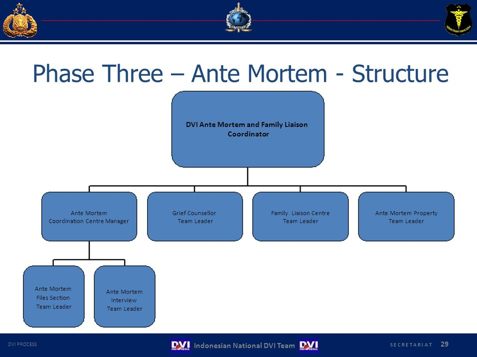 Phase Three – Ante Mortem - Structure
