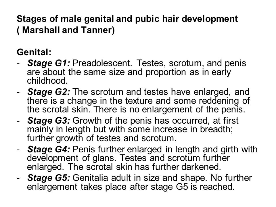Stages of male genital and pubic hair development