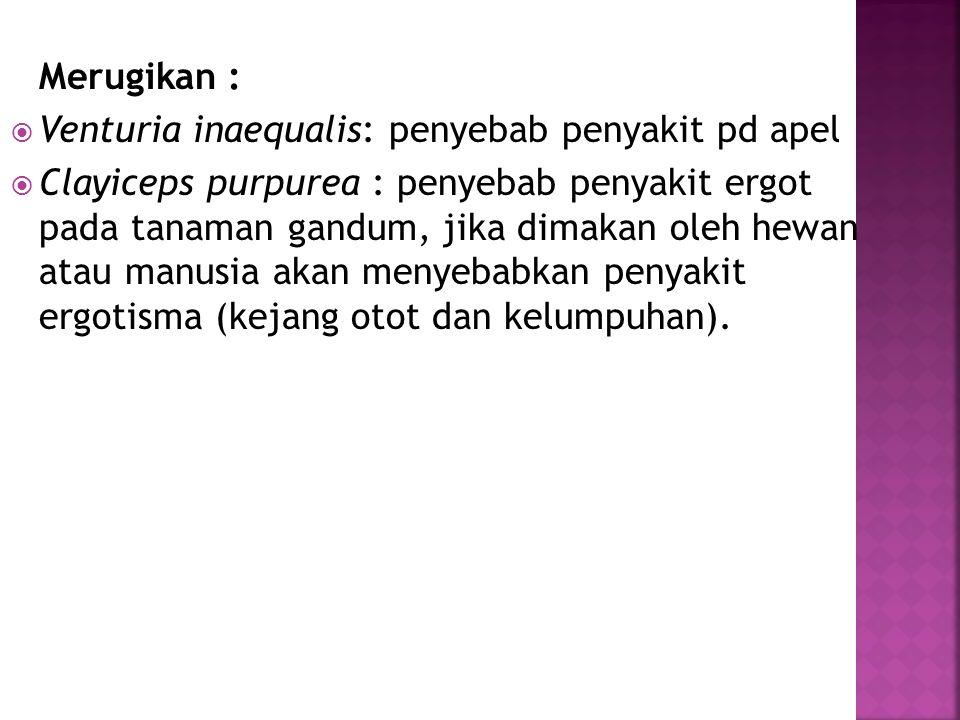 Venturia inaequalis: penyebab penyakit pd apel