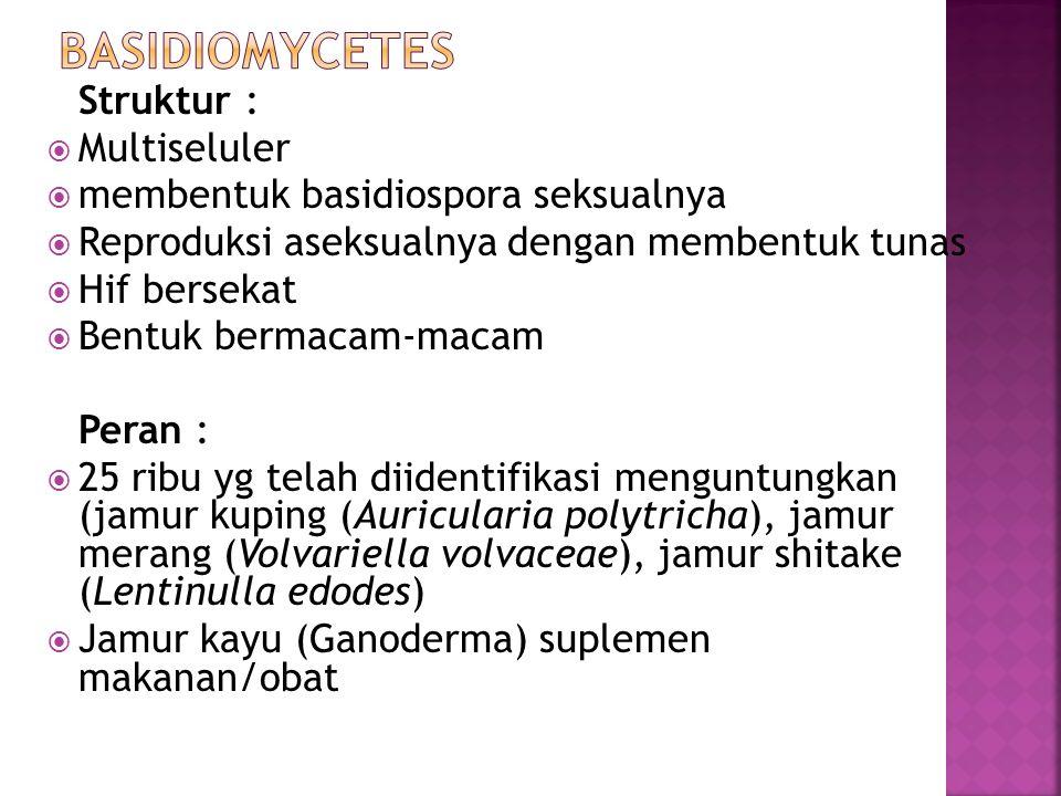 BASIDIOMYCETES Multiseluler membentuk basidiospora seksualnya