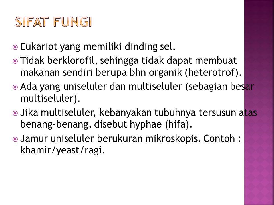SIFAT FUNGI Eukariot yang memiliki dinding sel.