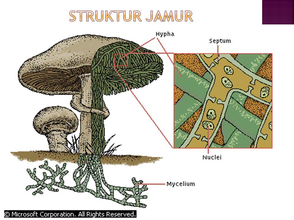 STRUKTUR JAMUR