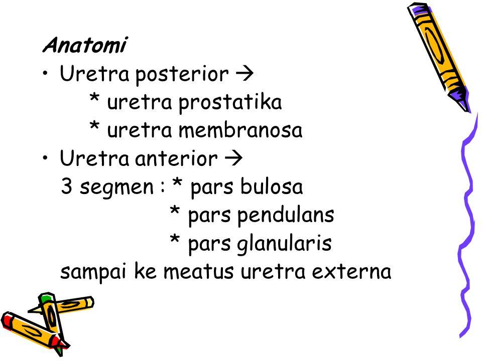 Anatomi Uretra posterior  * uretra prostatika. * uretra membranosa. Uretra anterior  3 segmen : * pars bulosa.