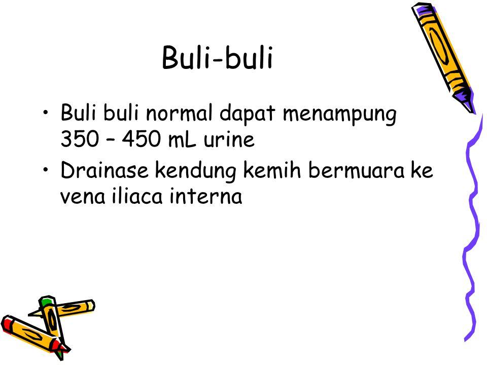 Buli-buli Buli buli normal dapat menampung 350 – 450 mL urine