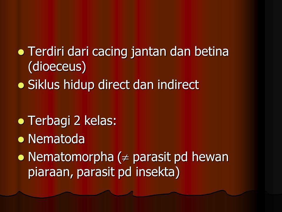 Terdiri dari cacing jantan dan betina (dioeceus)
