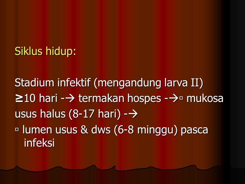 Siklus hidup: Stadium infektif (mengandung larva II) ≥10 hari - termakan hospes - mukosa. usus halus (8-17 hari) -